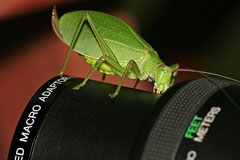 macro lens with katydid macro photo