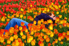 macro photographer photographing tulips in a tulip field